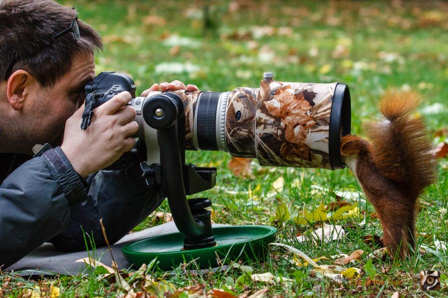 20121017 HLx 01 900x600 - Eichhörnchen
