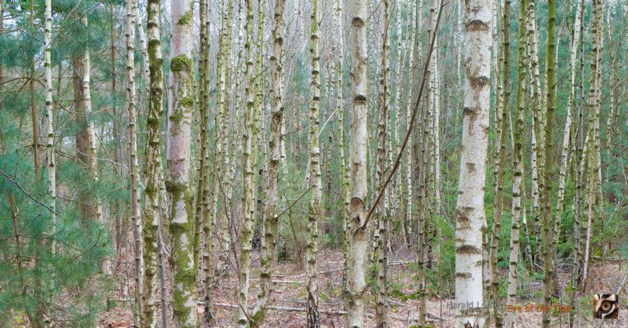 Wald voller Baeume