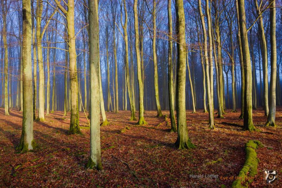 HL6 20110415 0048 900x600 - Landschaft