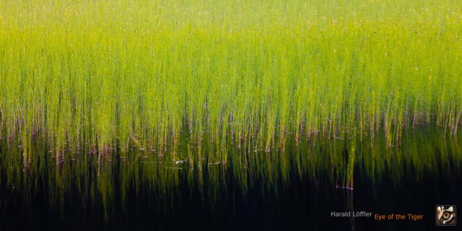 HL6 20110708 0852 900x450 - Atelier Natur