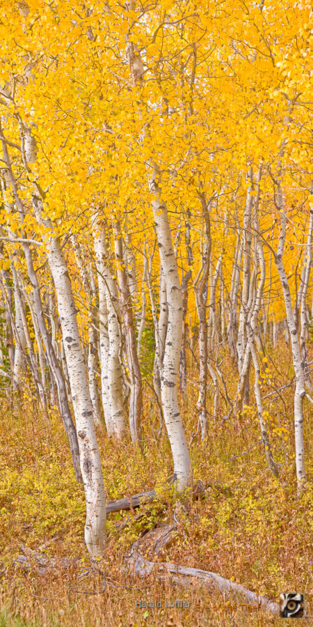 Fall Colors of the North