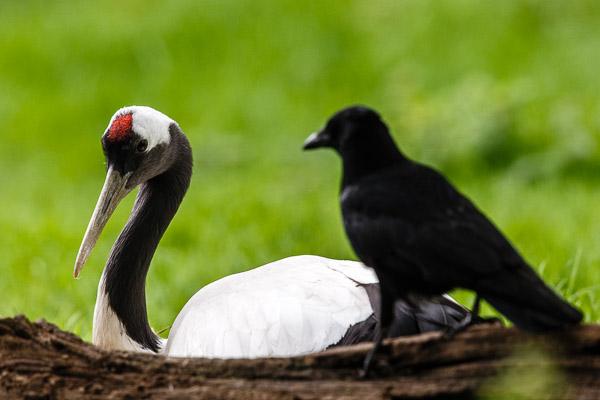Grundlagen der Tierfotografie – Workshop mit Harald Löffler