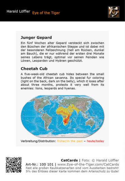 CatCard 100 101 Junger Gepard