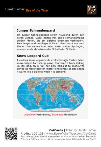 CatCard 100 102 Junger Schneeleopard