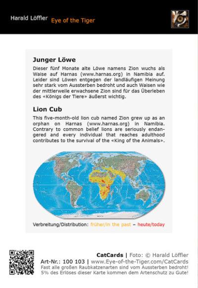 CatCard 100 103 Junger Löwe
