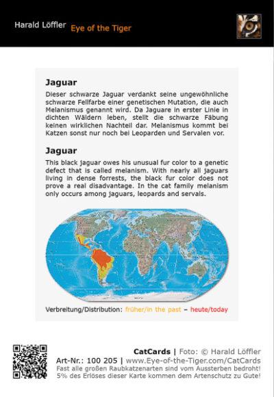 CatCard 100 205 Schwarzer Jaguar