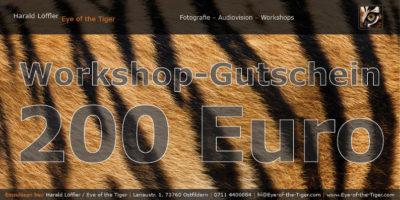Workshop-Gutschein im Wert von 200,- Euro