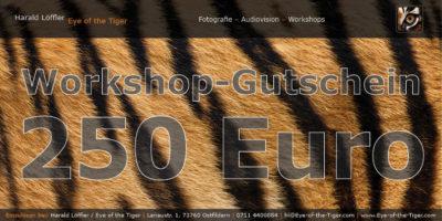 Workshop-Gutschein im Wert von 250,- Euro