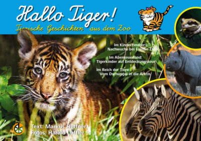 Hallo Tiger 1 400x282 - Shop
