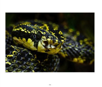 Snakes - Faszination Schlangen – Buch von Harald Löffler