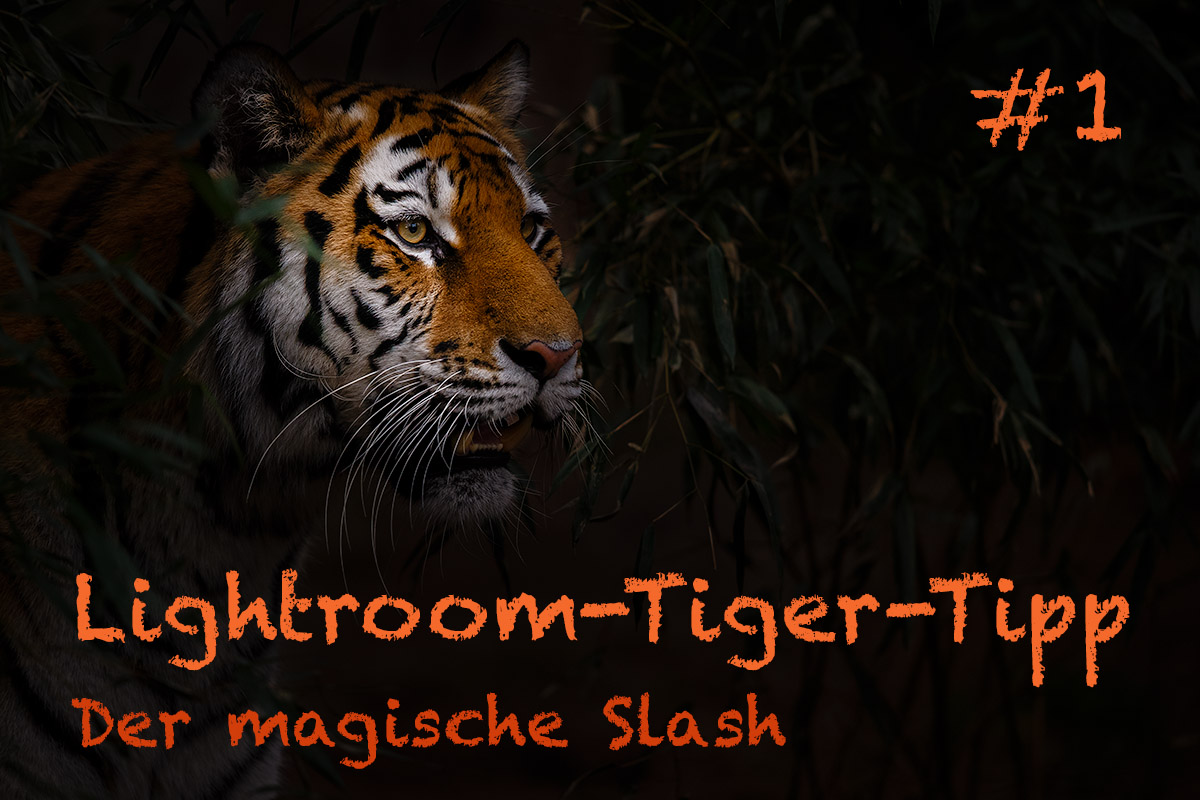 LTT001 00 Header - Lightroom-Tiger-Tipps