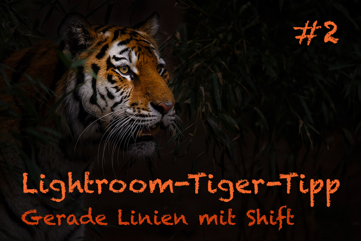 "LTT002 00 Header - Lightroom-Tiger-Tipp #2: ""Gerade Linien mit Shift"""