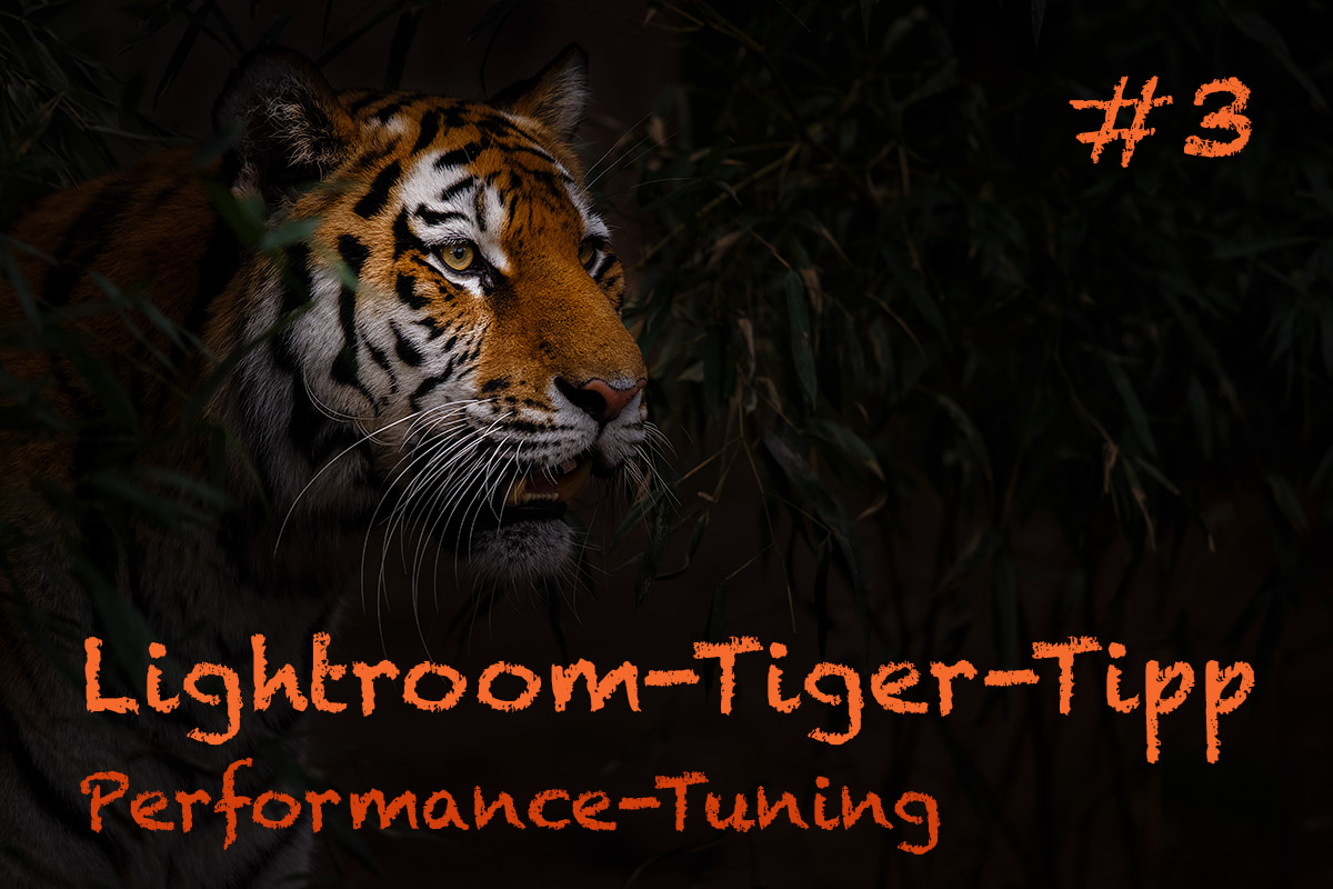 "LTT003 00 Header - Lightroom-Tiger-Tipp #3: ""Performance-Tuning"""
