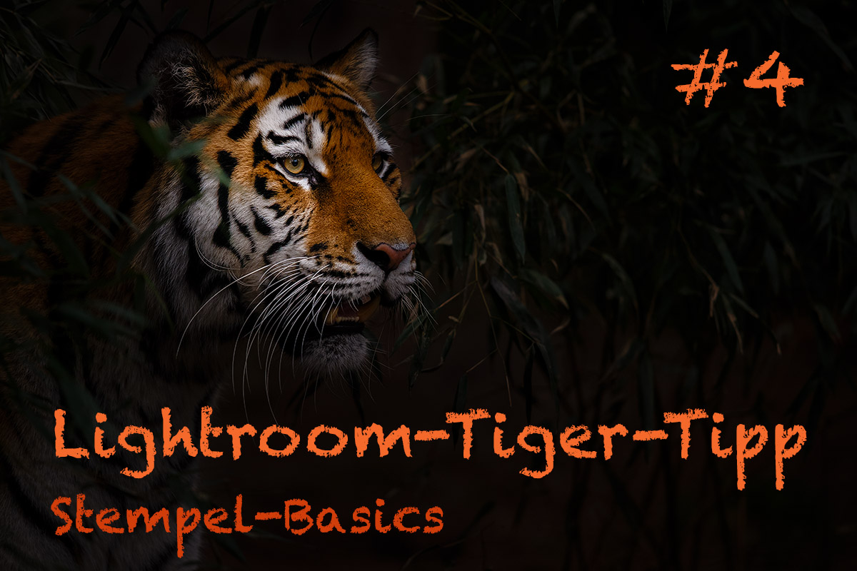 LTT004 00 Header - Lightroom-Tiger-Tipps