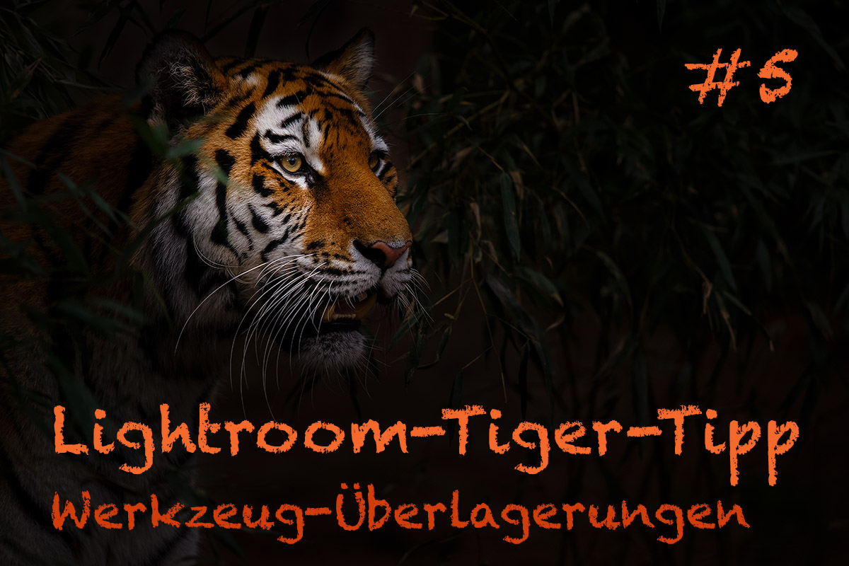 LTT005 00 Header - Lightroom-Tiger-Tipps