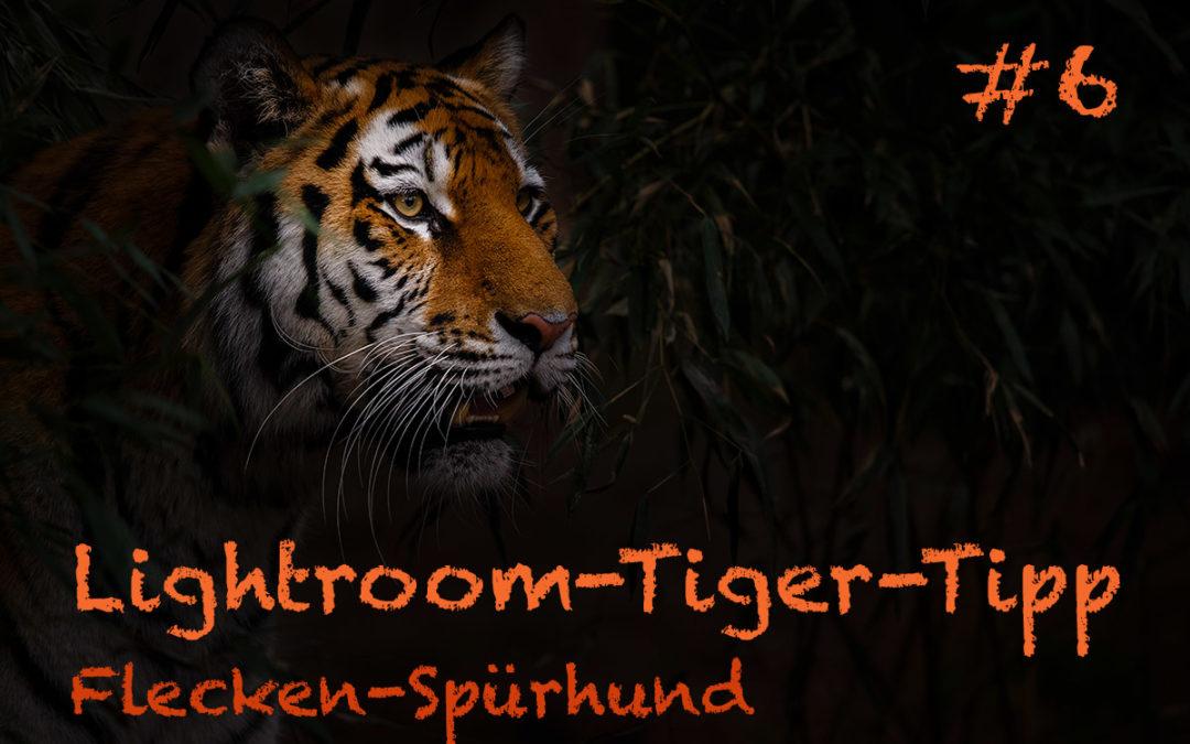 """Lightroom-Tiger-Tipp #6: """"Flecken-Spürhund"""""""