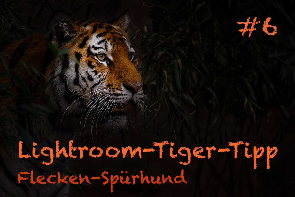 LTT006 00 Header - Lightroom-Tiger-Tipps