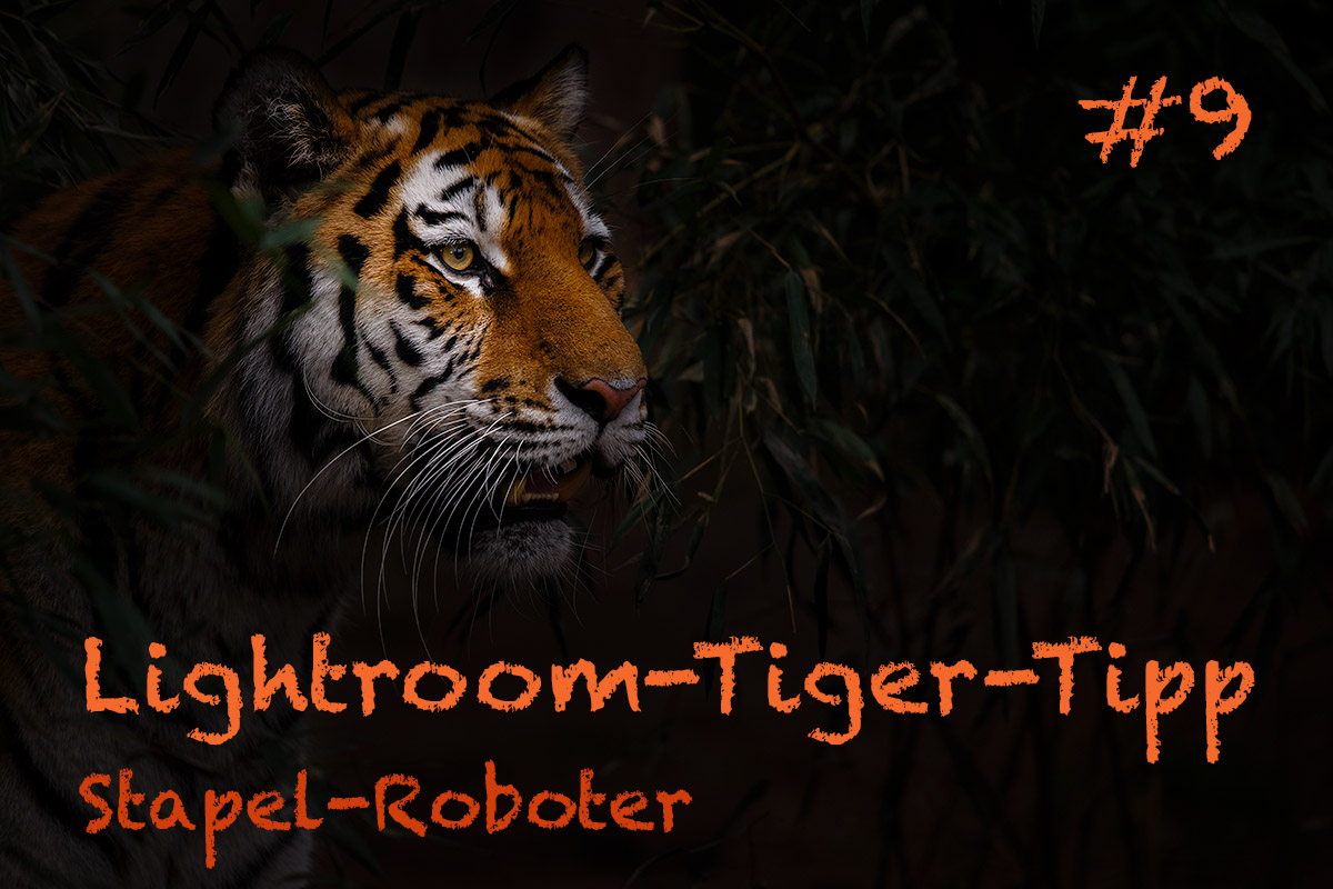 LTT009 00 Header - Lightroom-Tiger-Tipps