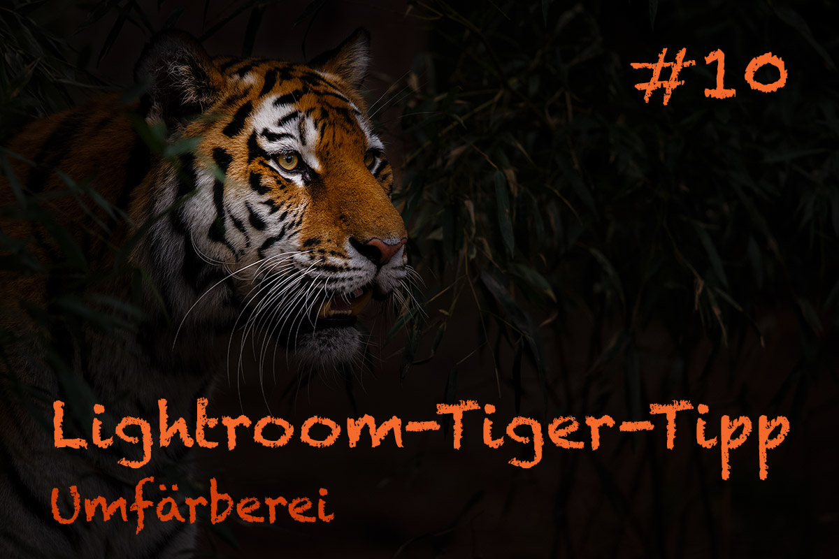 LTT010 00 Header - Lightroom-Tiger-Tipps