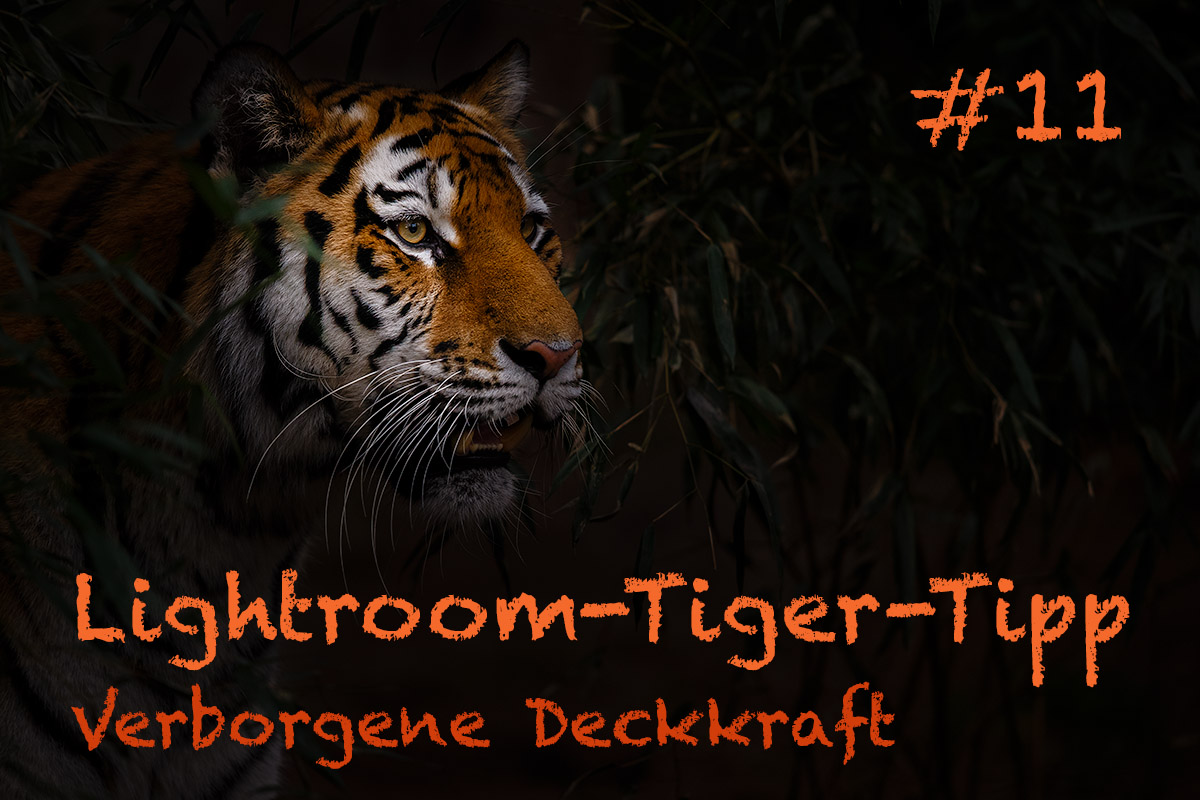 LTT011 00 Header - Lightroom-Tiger-Tipps