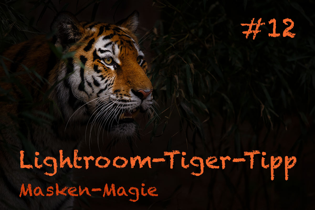 LTT012 00 Header - Lightroom-Tiger-Tipps