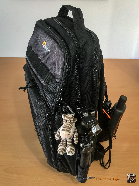 20201020 HLi 7128 - Der Tiger reist mit kleinem Gepäck
