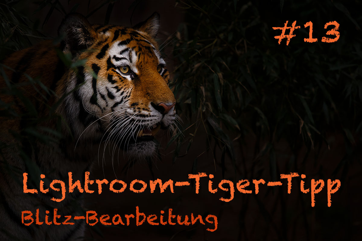 LTT013 00 Header - Lightroom-Tiger-Tipps
