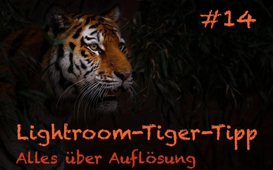 """Lightroom-Tiger-Tipp #14: """"Alles über Auflösung"""" (komplett)"""