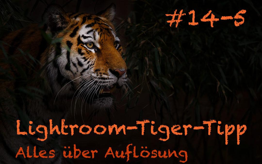 """Lightroom-Tiger-Tipp #14: """"Alles über Auflösung"""" – Teil 5"""