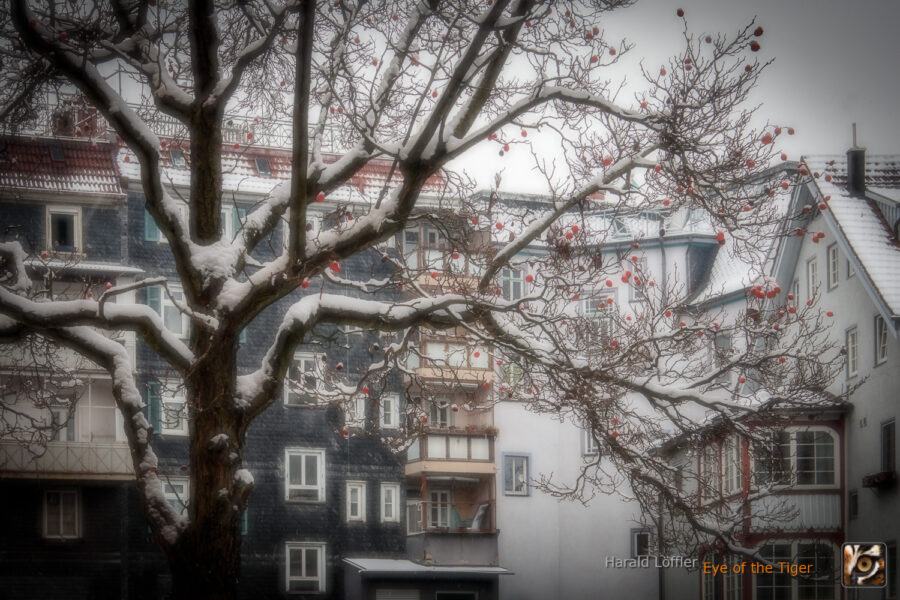20210117 HLB 7134 01 900x600 - Ein kalter Januarmorgen